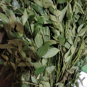 Curry leaves (Kadi Patta) 100gm