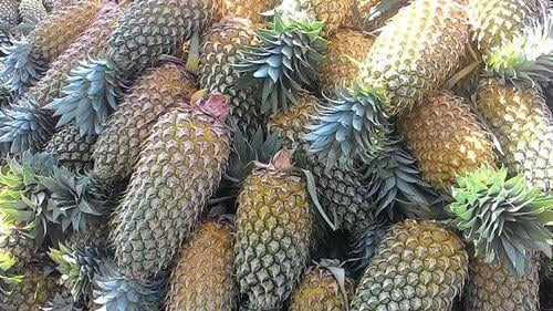 Pineapple Queen(Rani) Per PC (approx 1-1.5kg)