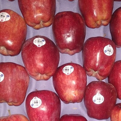 Apple Washington 1KG