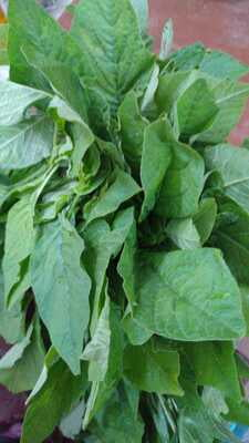 Chaulai Saag (Amaranth) Green 250gm