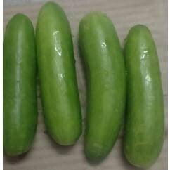 Cucumber Chinese 500gm approx
