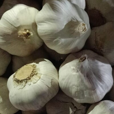 Garlic Whole Thick 250gm