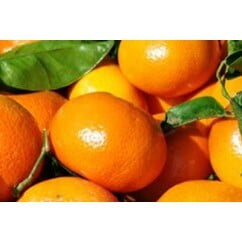 Orange Kinnow 1KG